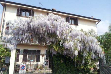 Wisteria 'Africa in Turin' - Nichelino