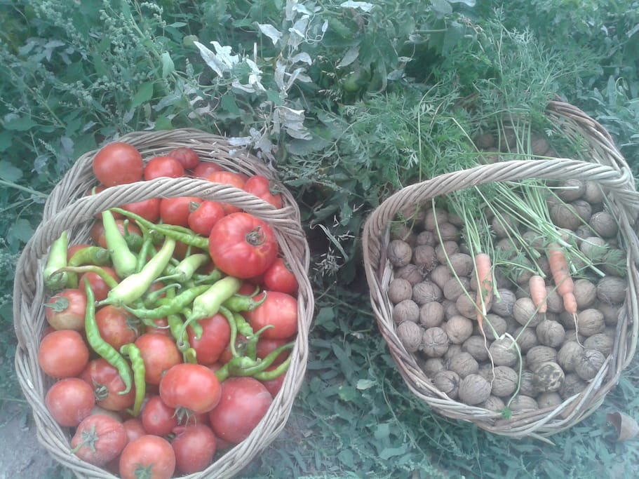 organic product from garden