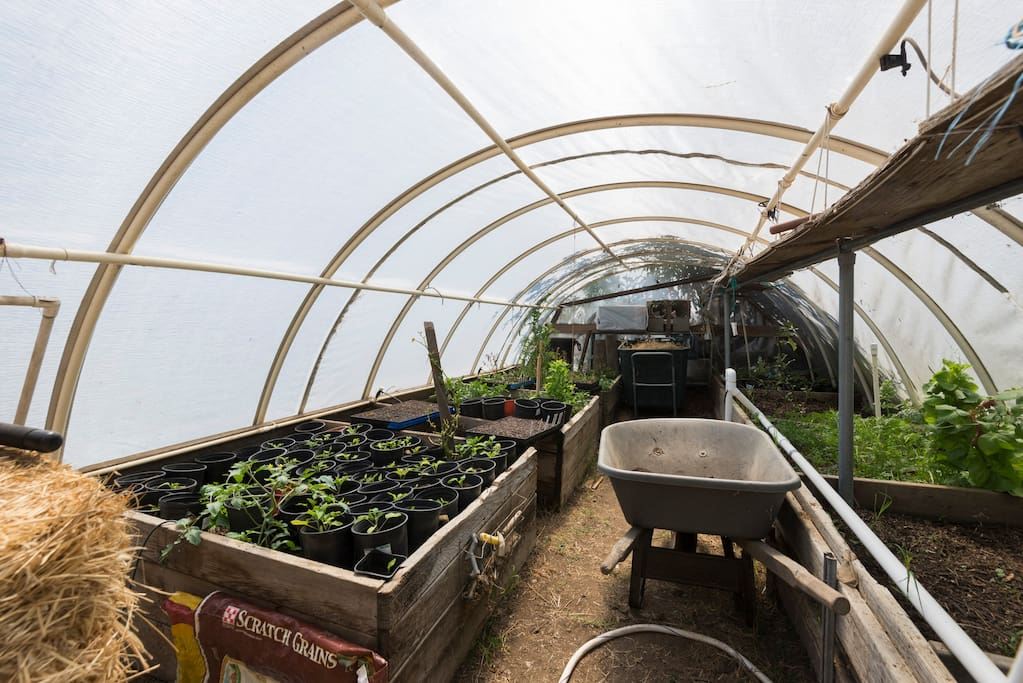 No, this is not the bedroom, but our greenhouse where we start and grow lots of veggies.
