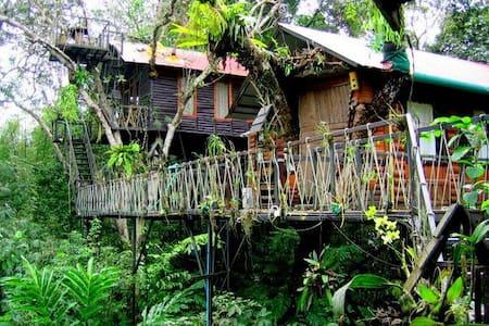 Jungle tarzan view point - Phanom