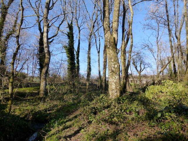 North Brewham Woodland House  - Bruton - Wikt i opierunek