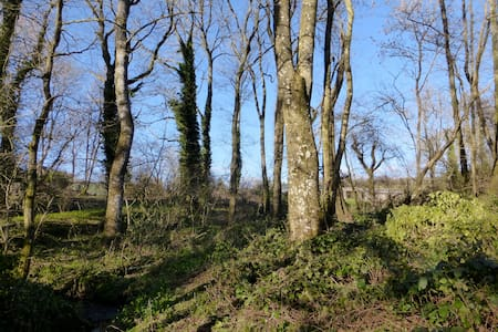 North Brewham Woodland House  - Bruton