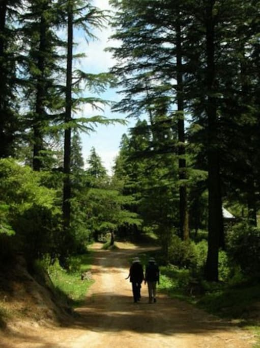 Stunning walking trails for nature lovers!