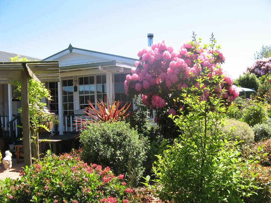 Relax in the Garden Room at Hillside Bed & Breakfast Huon Valley and enjoy the local bird life