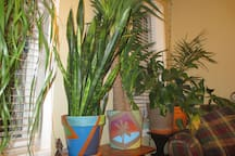 Tons for Fresh Air Plants!