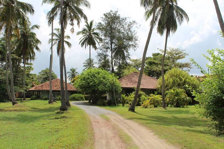 Leana Lagoon Cottages - Negombo - Villa