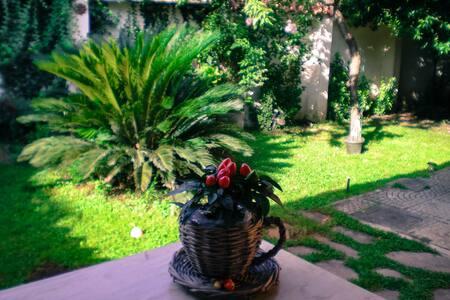 Pace e delizia tra Roma e Frascati - Rome - Appartement