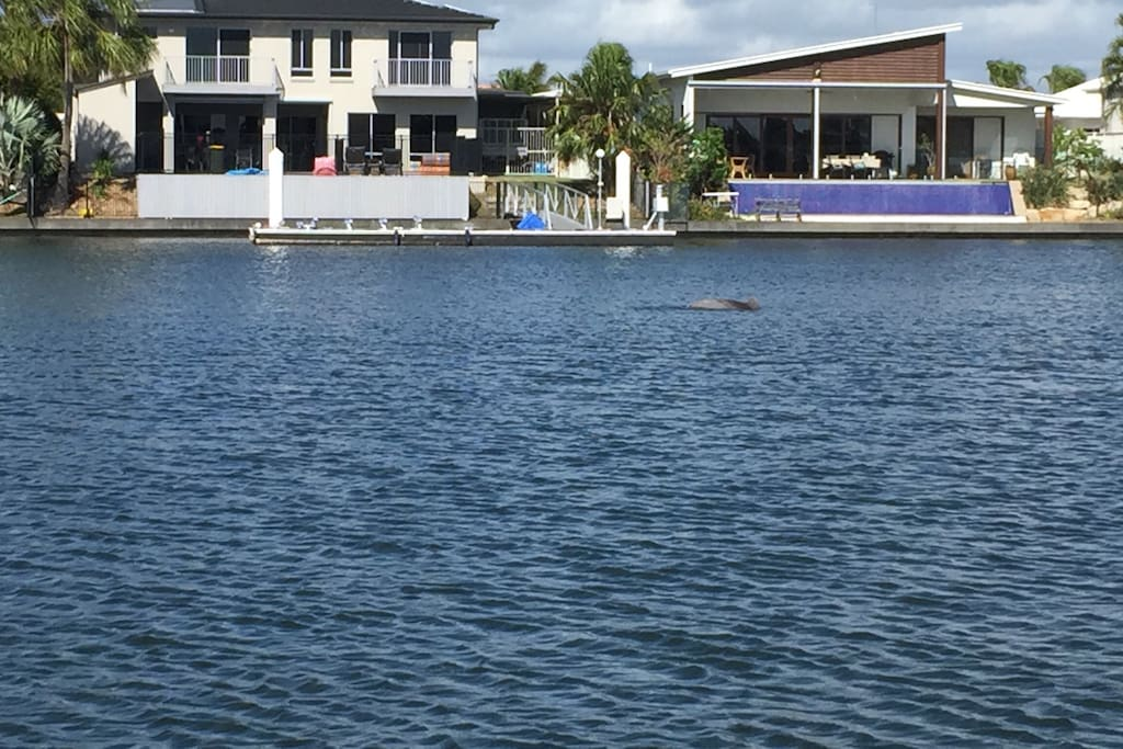 Dolphins swimming in the canal