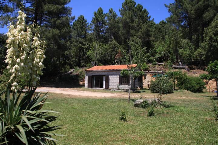 Maison de 70m2 - Levie - House