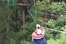 Canopy tree tops activity near by