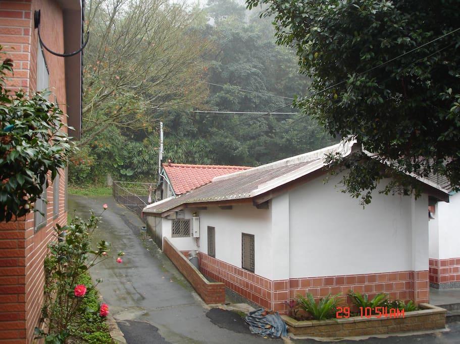 這條小路是我們的私房賞桐路線,通往幾無人知曉的神木區。