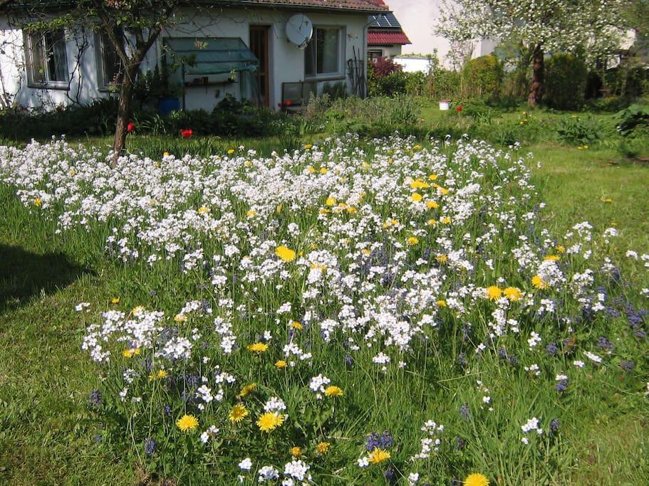So sieht der Garten im Frühling aus.