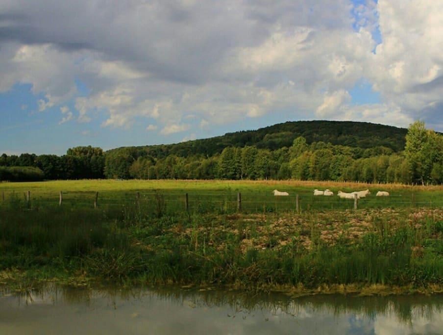 Une des nombreuses vallées de Bretoncelles