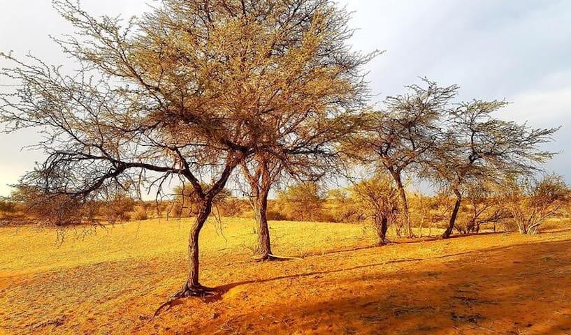 Camelthorn Tree photo 1