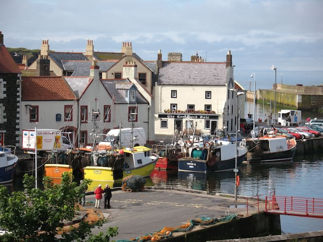 Apartment Right on the Harbour!   - Eyemouth