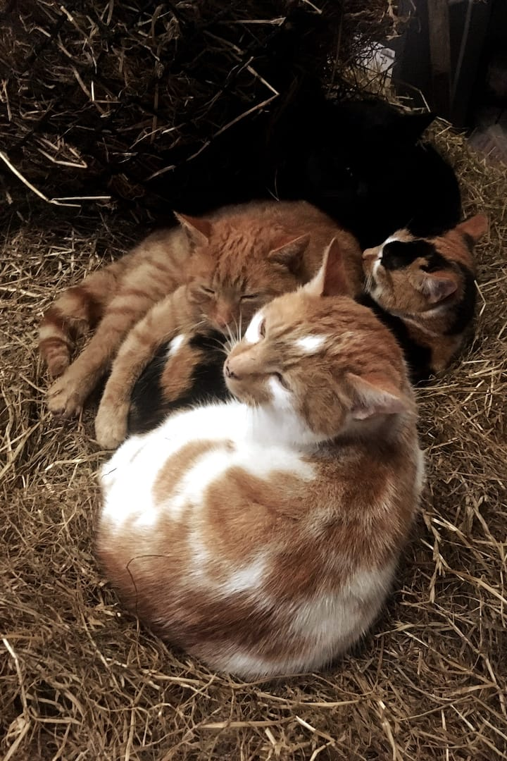 The cats are keeping warm in the hay