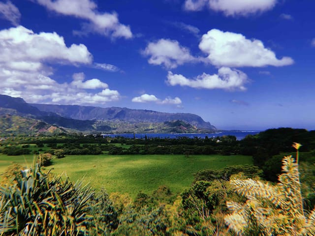 Beautiful Hanalei Valley, this is on your way down the hill from the condo to Hanalei Town.