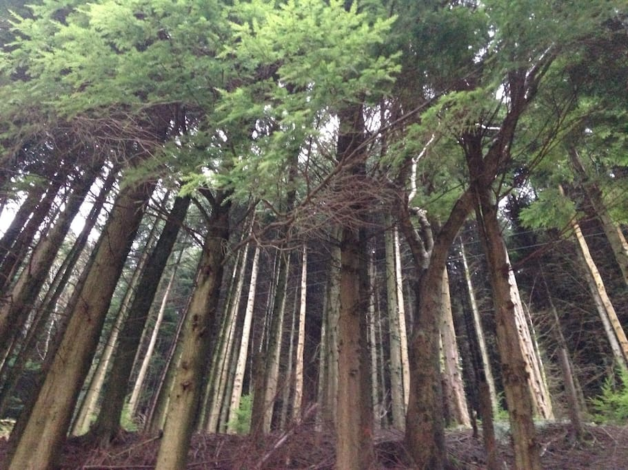 Beautiful forest walks for all abilities on your doorstep.