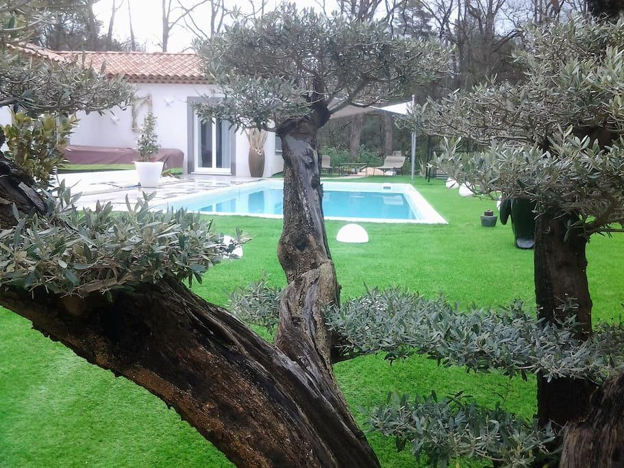 olivier 150 ans