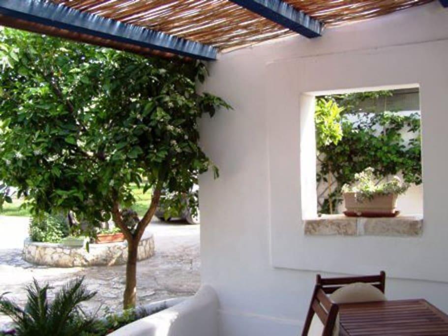 Veranda antistante la camera, in mezzo ad alberi di agrumi...