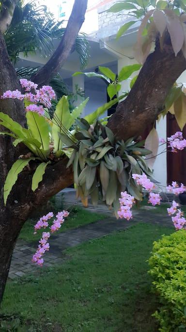 my flower blossom