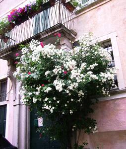 bilocale in dimora settecentesca - Miasino - Lägenhet