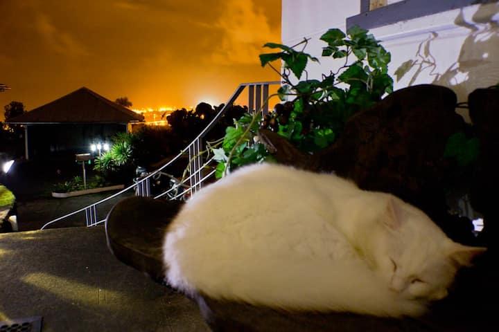 Hilltop Legacy | Volcano Room