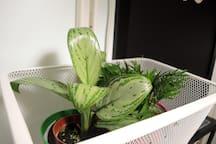 室內小盆栽,點綴綠意也清新空氣