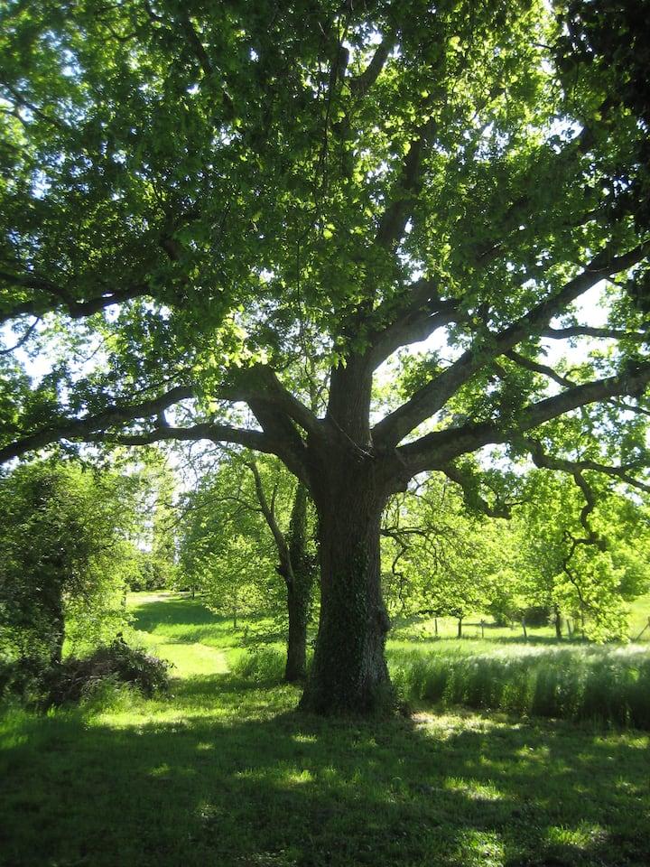 Chambre d'hôte indépendante Forêt en Périgord
