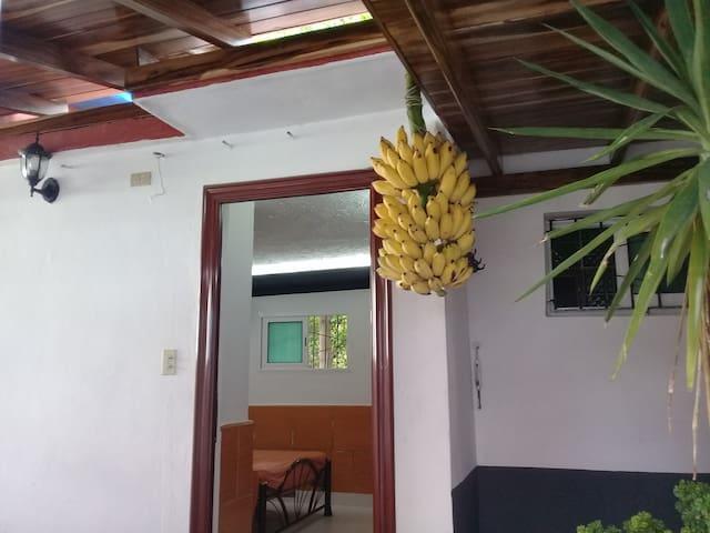 La mejor oferta. Ahora con Plátanos incluidos