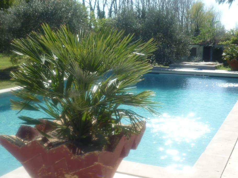 Grande piscine 11x6 sécurisée et chauffée