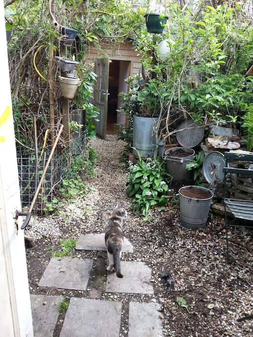 The garden with biscuit (the cat)