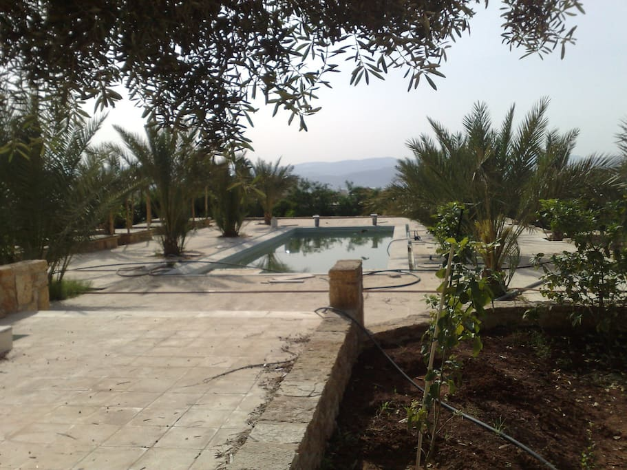 Pool from a distance