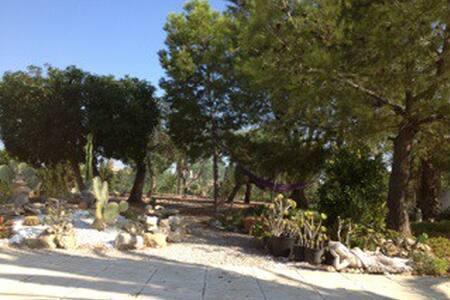 Estudio en medio de la naturaleza - Alicante - Muchamiel