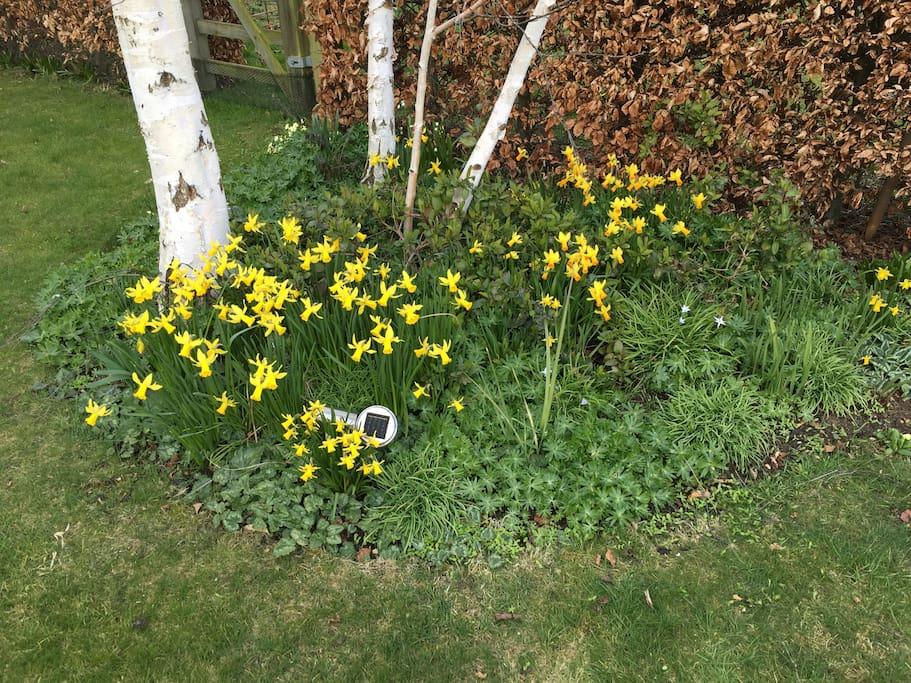 Spring has come to the garden