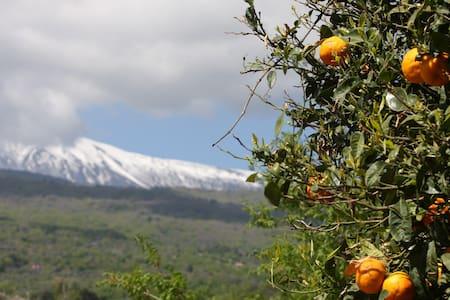 Red Etna-Taormina: the land of wine - Piedimonte Etneo