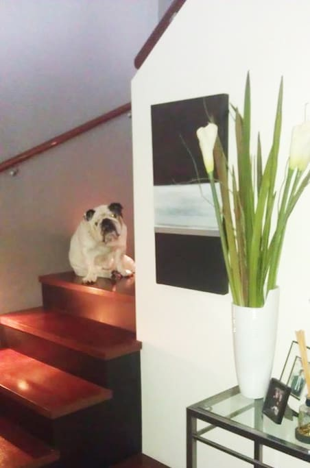 This is showing that we have stairs but now no Bulldog- just Billy my little white fluffy and Julia and I.