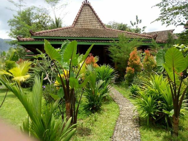 Omah Setumbu - Borobudur - Borobudur