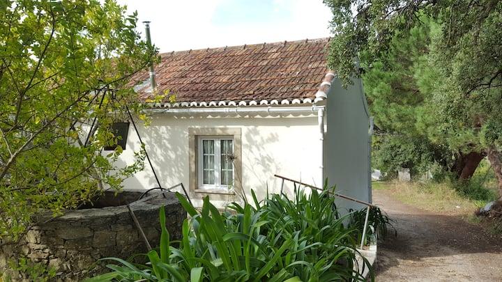Cork Oak Tree House