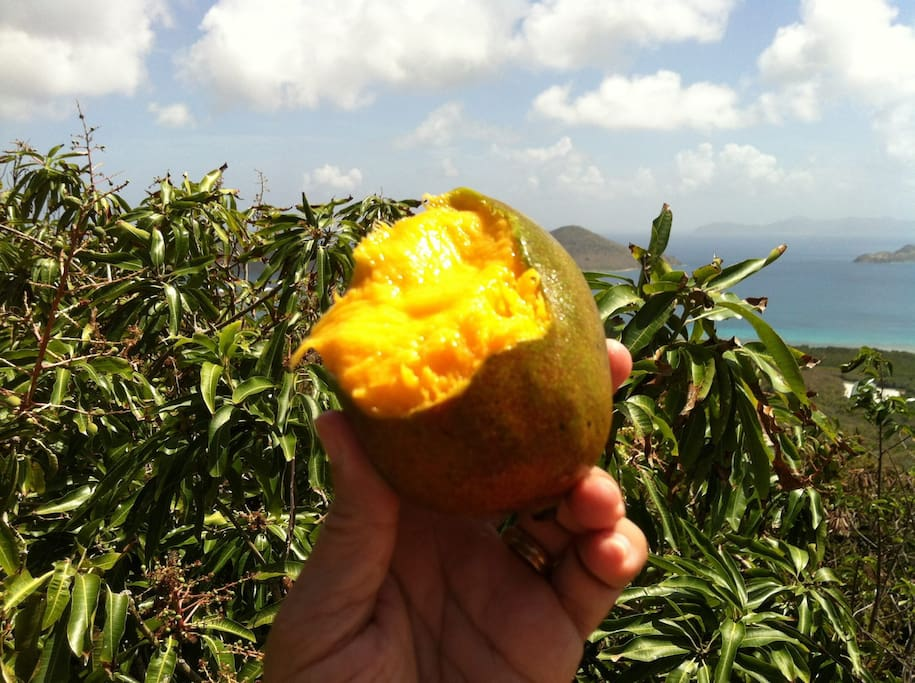 Pick a mango from the mango tree right off the deck