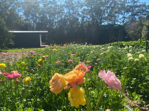 Tamborine Mountain Flower Farm