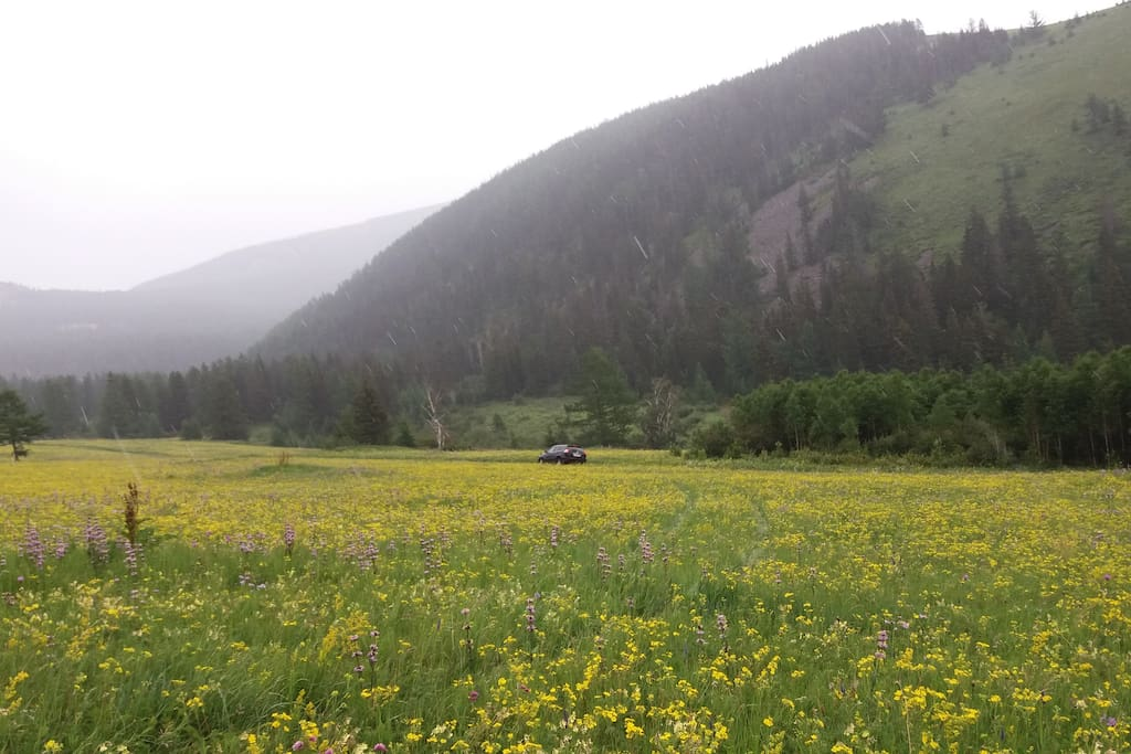 Between Altai Mountains and Flowers