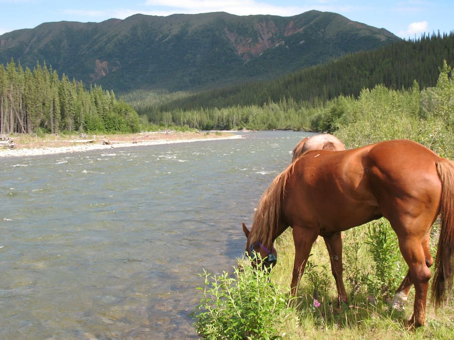 One of my favorite spots to camp on one of the horseback trips we offer.