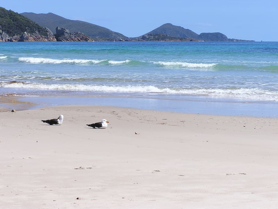 Stroll along beautiful Sisters Beach while staying in 'Boronia Cottage in the Tassie bush'. The beach is an eight to ten minute walk or 2 minutes in the car.