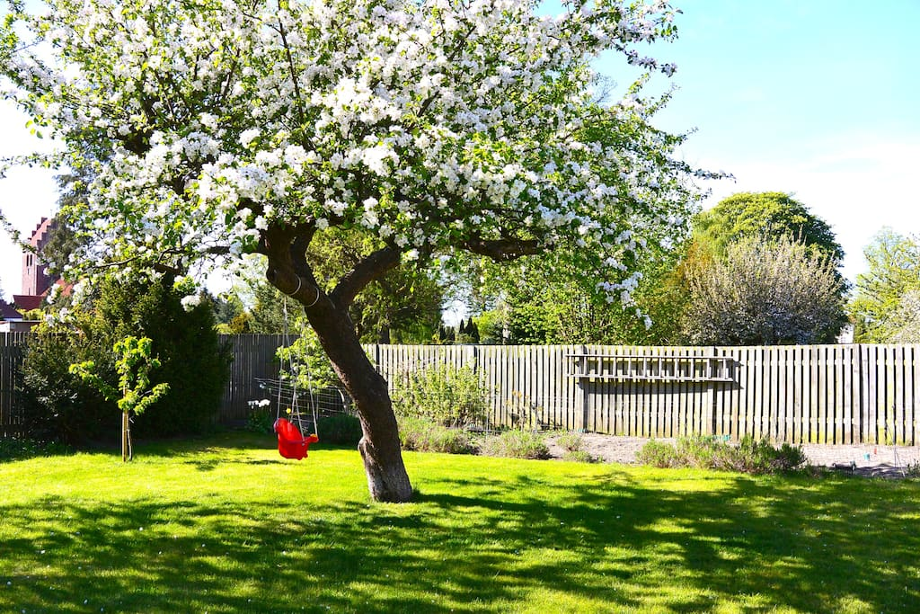 The blooming garden has direct sunlight all day long - feel free to pick an apple from the tree.