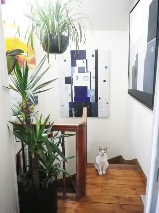 """Mon chat """"Coquine"""" qui prend la pause sur le palier ;-)"""