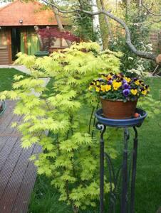 Studio for 2 in quiet garden - Cambridge - Chalé
