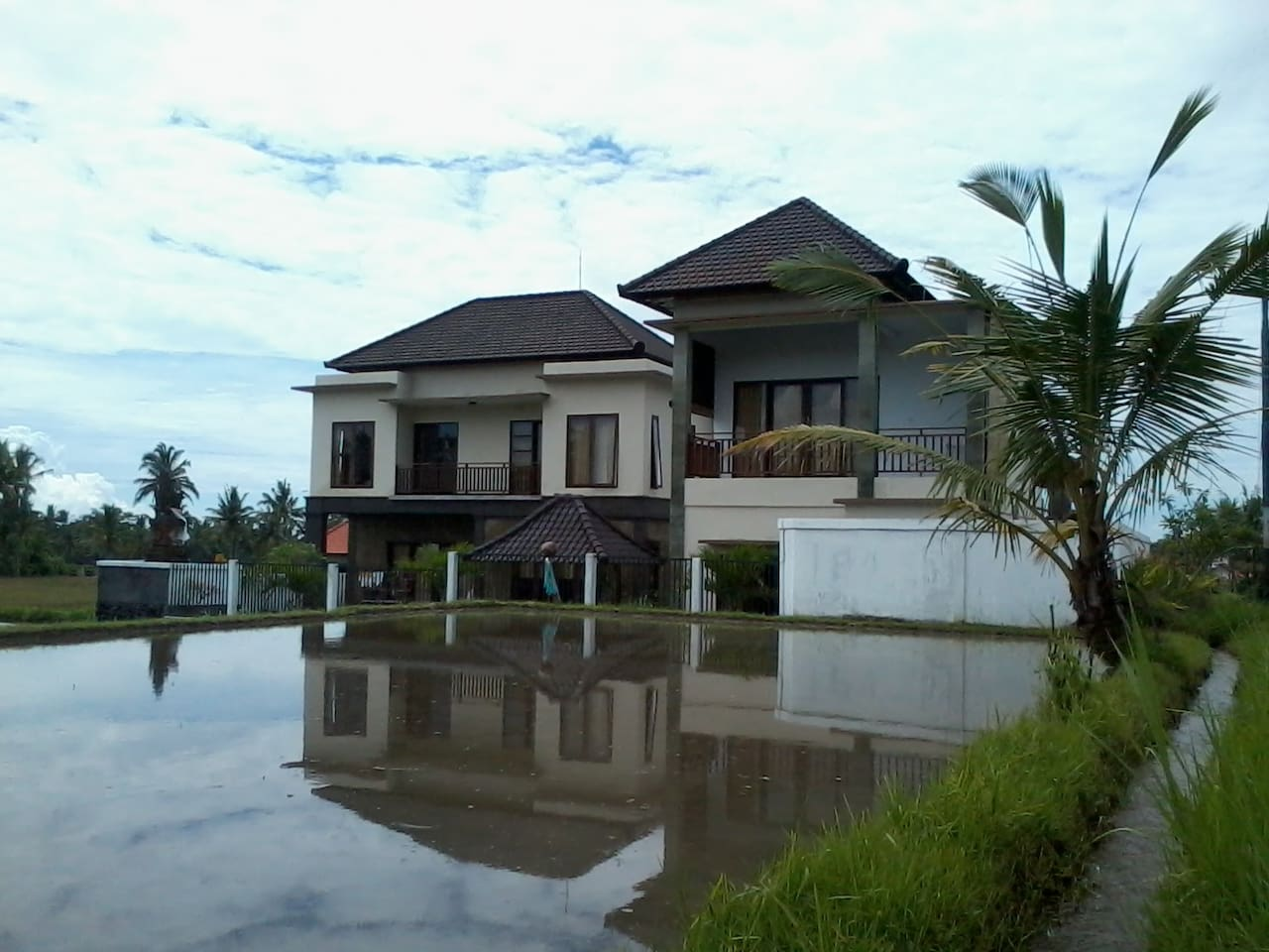 Side view next to rice field