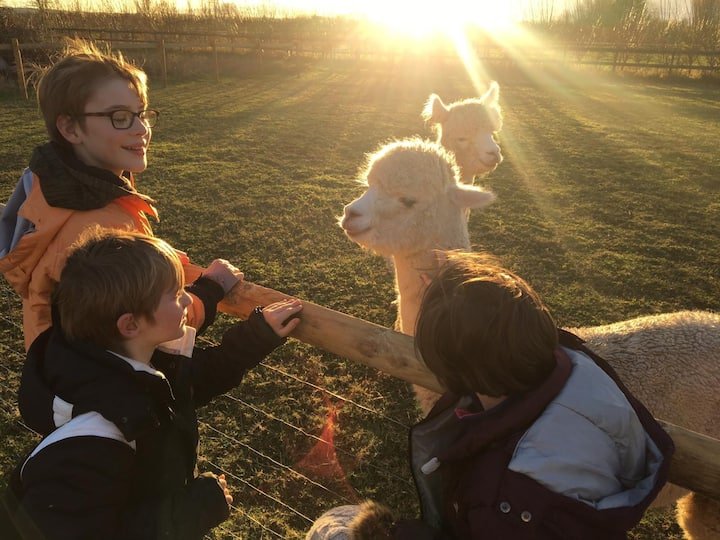 Wiltshire glamping at LacockAlpaca: Red Kite