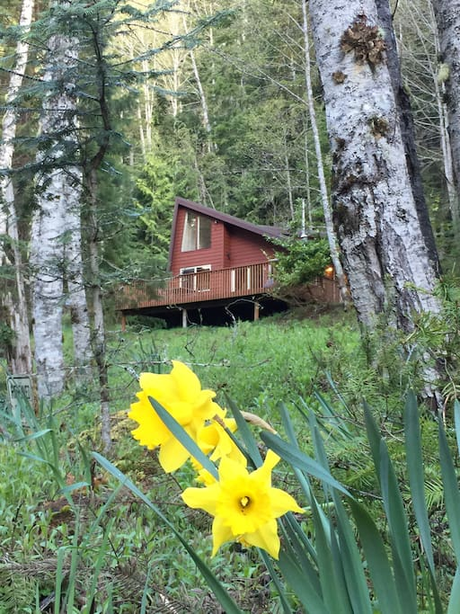 Enchanted forest cabin in olympic national park houses for Cabin rentals olympic national forest